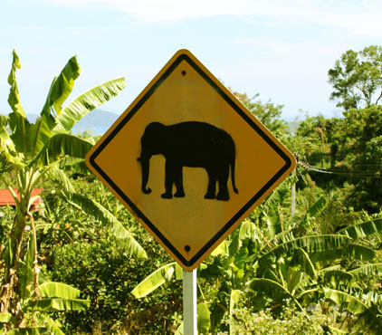 Watch out for elephants when driving